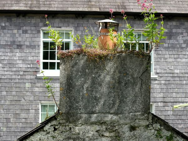 Chimney garden Chimney Pots Chimney Plants And Flowers Outdoors Building Exterior Day Built Structure Slate Slates Slateroof No People Architecture Freshness Kinsale West Cork Ireland