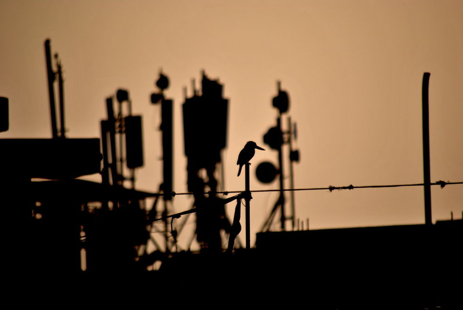 Bird Chaos Check This Out City City Life Dusk Illuminated Industrial Industrial Landscapes Kingfisher Bird Lighting Equipment Lone Bird Lone Bird Sittig Man Made Beauty Man Made Structure Network No People Orange Sky Outdoors Pole Sepia Shadow Silhouette Sunset Towers Adapted To The City