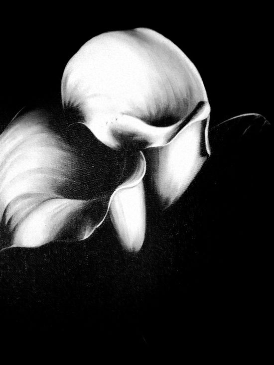 Black And White Flower Contrast