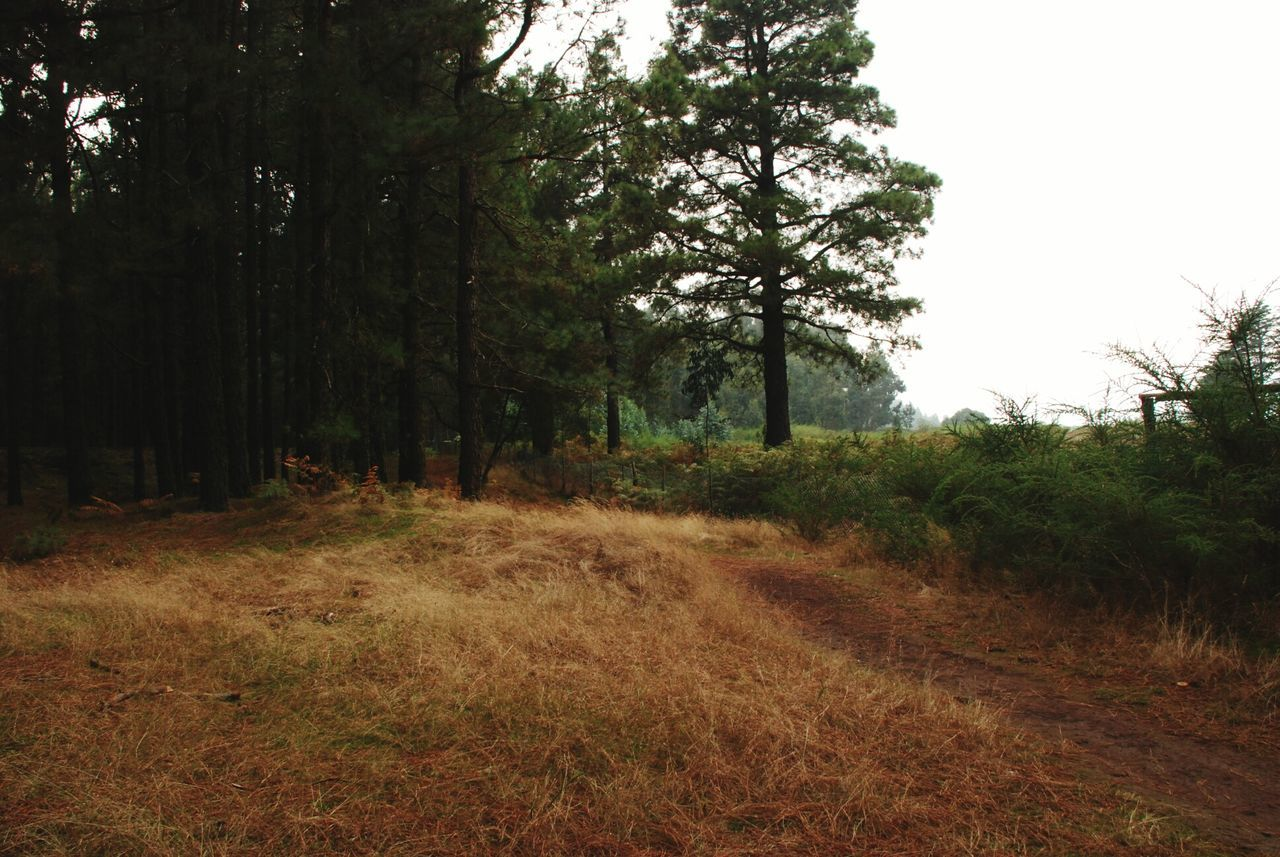 tree, forest, nature, landscape, grass, vegetation, flora, growth, no people, outdoors, day