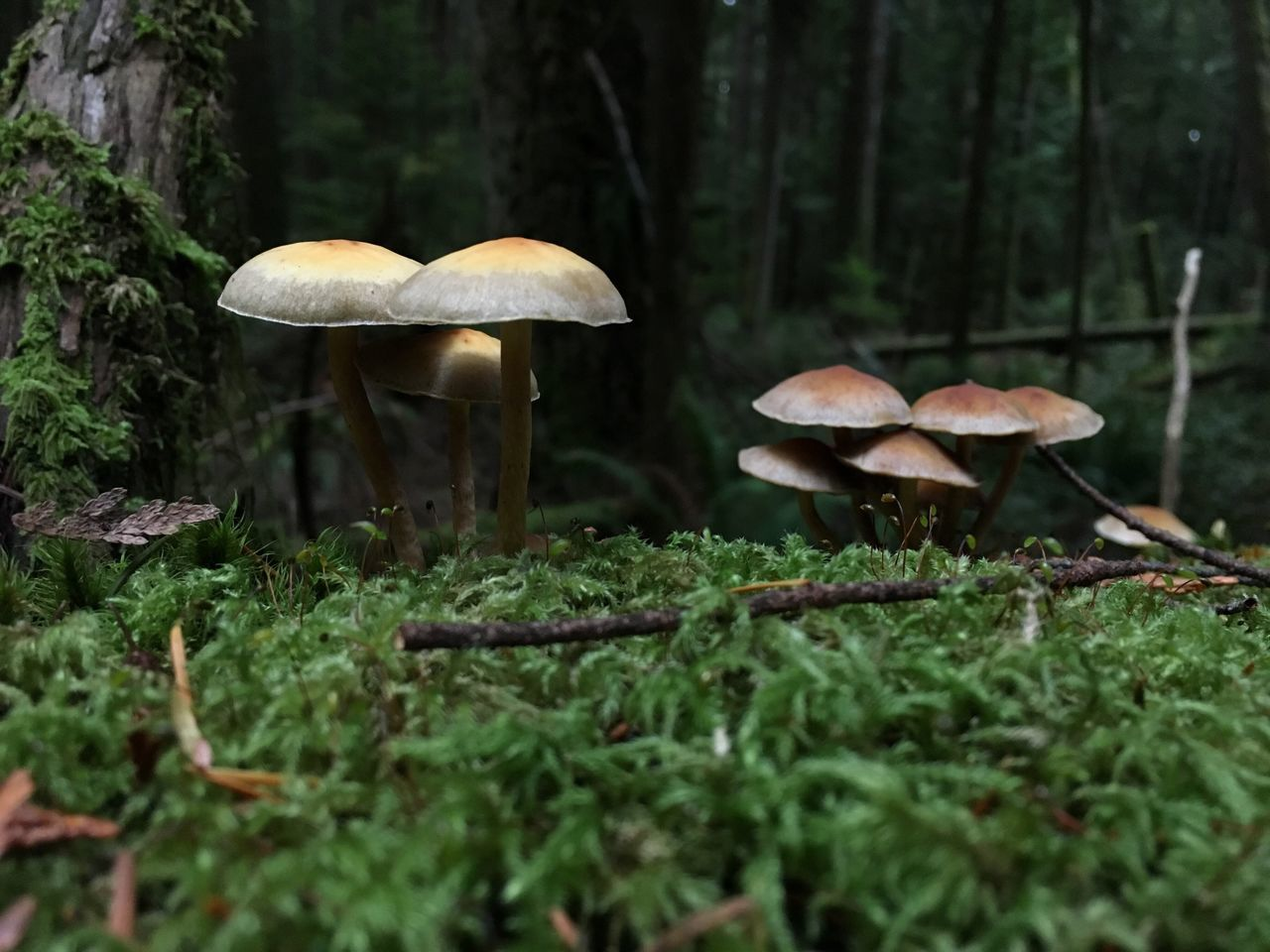 Deep in the woods Mushroom Nature Growth Outdoors Close-up Surface Level No People Freshness Fragility Forest Photography Beauty In Nature Beauty In Nature Fall Beauty Nature