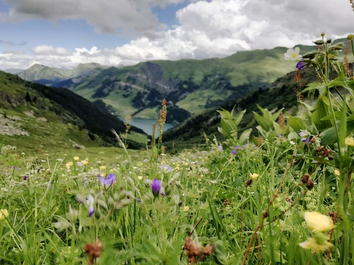 Alps Flowers Nature Flower Mountain Growth Beauty In Nature Wildflower Mountain Range Field Day Plant Sky Outdoors Scenics Grass No People Landscape Freshness Fragility Flower Head Close-up