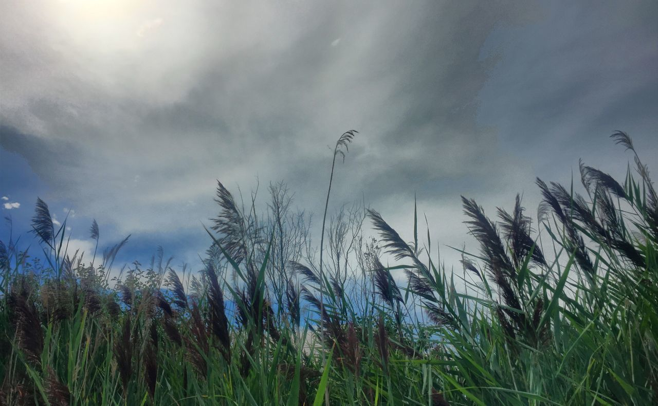 Growth Plant Low Angle View Grass Sky Field Nature Tranquility Close-up Beauty In Nature Focus On Foreground Cloud Scenics Cloud - Sky Crop  Rural Scene Cereal Plant Outdoors Tranquil Scene Hmmmm😍