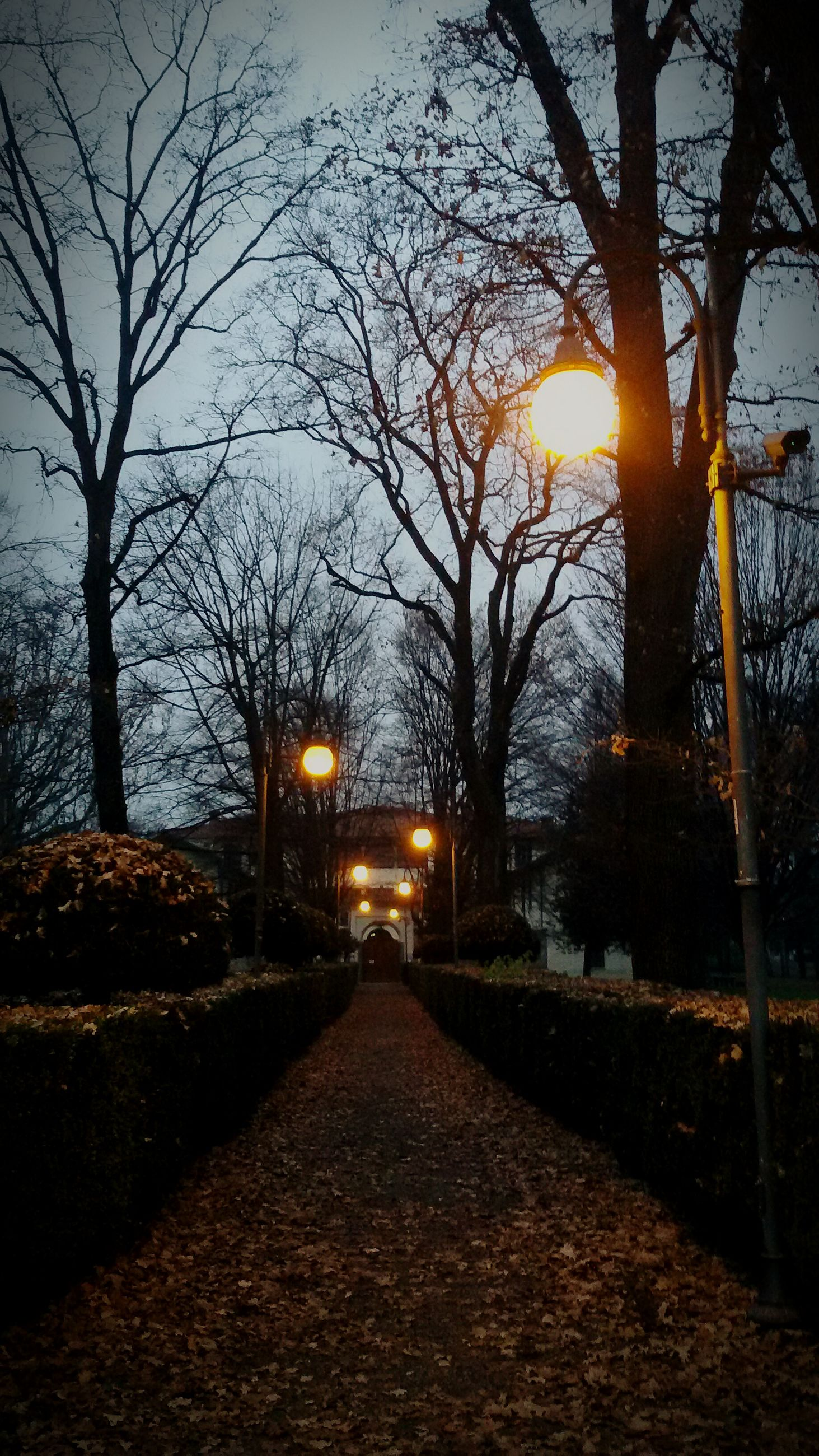 sunset, tree, bare tree, the way forward, illuminated, sun, street light, sky, orange color, branch, diminishing perspective, silhouette, street, tranquility, nature, lighting equipment, vanishing point, footpath, outdoors, built structure
