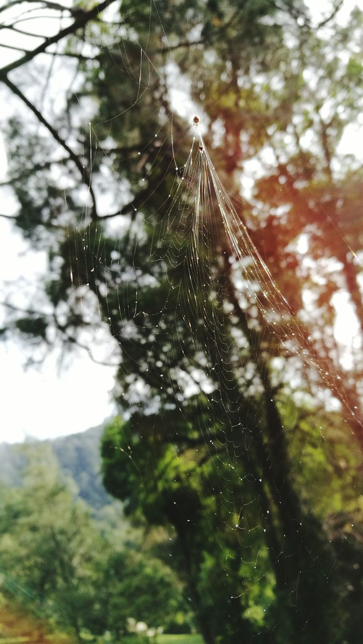 nature, spider web, focus on foreground, day, growth, spider, outdoors, no people, low angle view, tree, web, close-up, beauty in nature, fragility, freshness, sky
