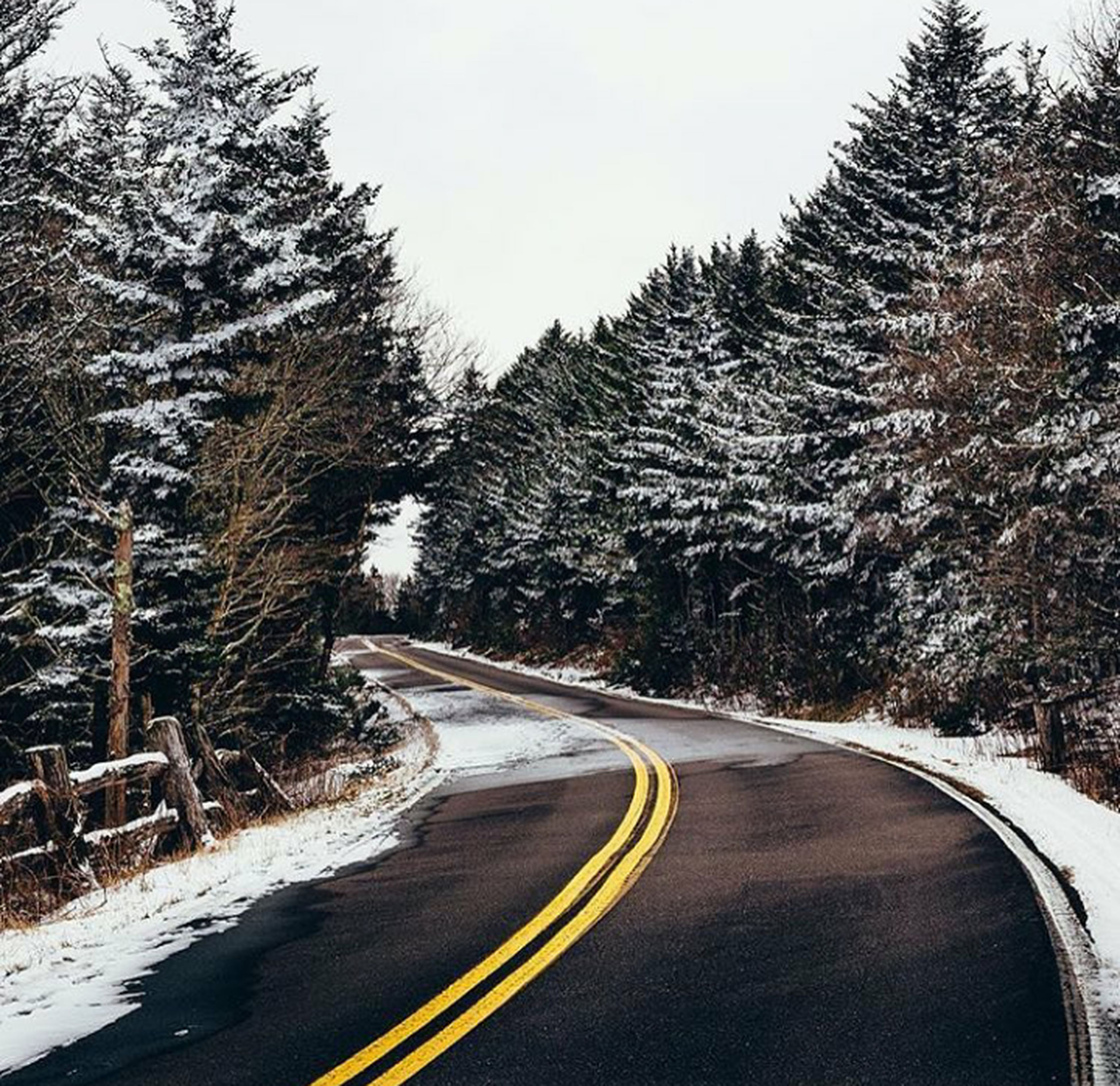 tree, road, the way forward, transportation, no people, winding road, highway, forest, outdoors, nature, landscape, beauty in nature, day, sky