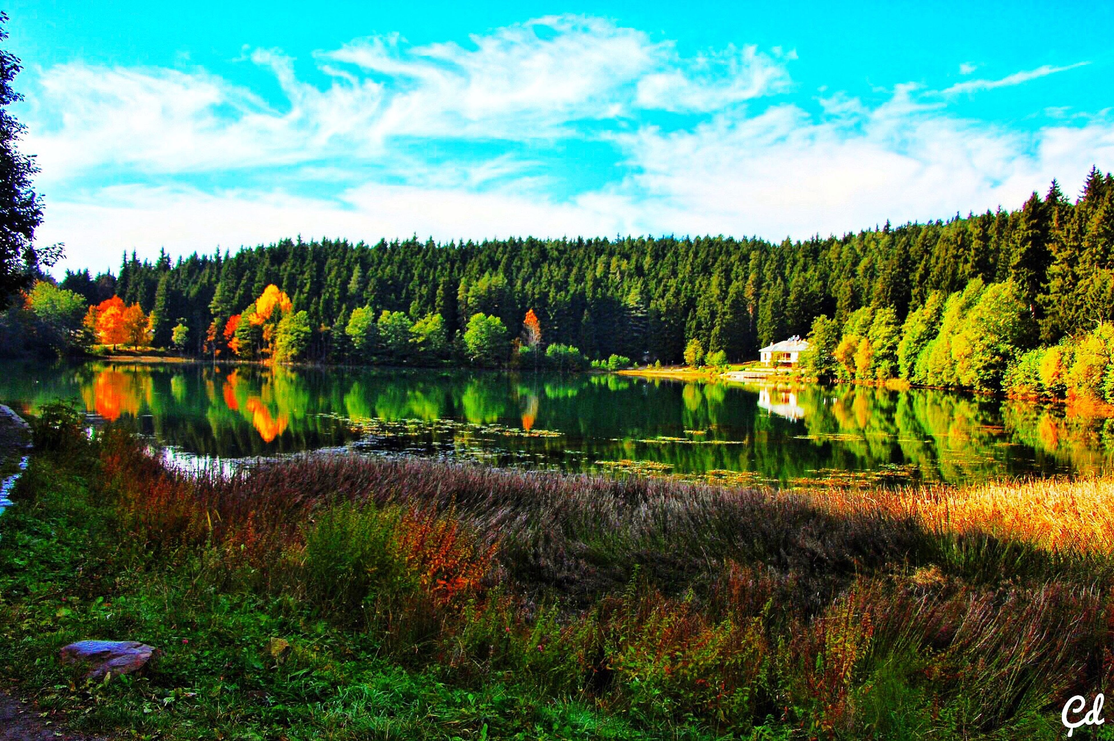 water, tranquil scene, reflection, lake, scenics, tranquility, beauty in nature, tree, sky, nature, non-urban scene, pond, landscape, remote, idyllic, calm, countryside, growth, day, plant, blue, multi colored, solitude, standing water, cloud - sky, surrounding, green color, no people, majestic, green, lakeside