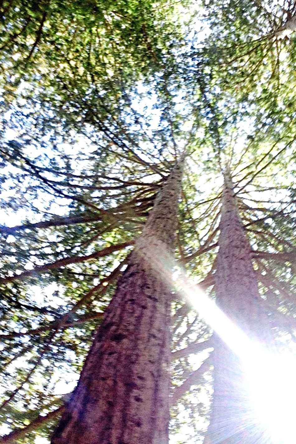 Life... 🌲 Taking Photos OpenEdit Trees Hello World Check This Out Pretty Fresh