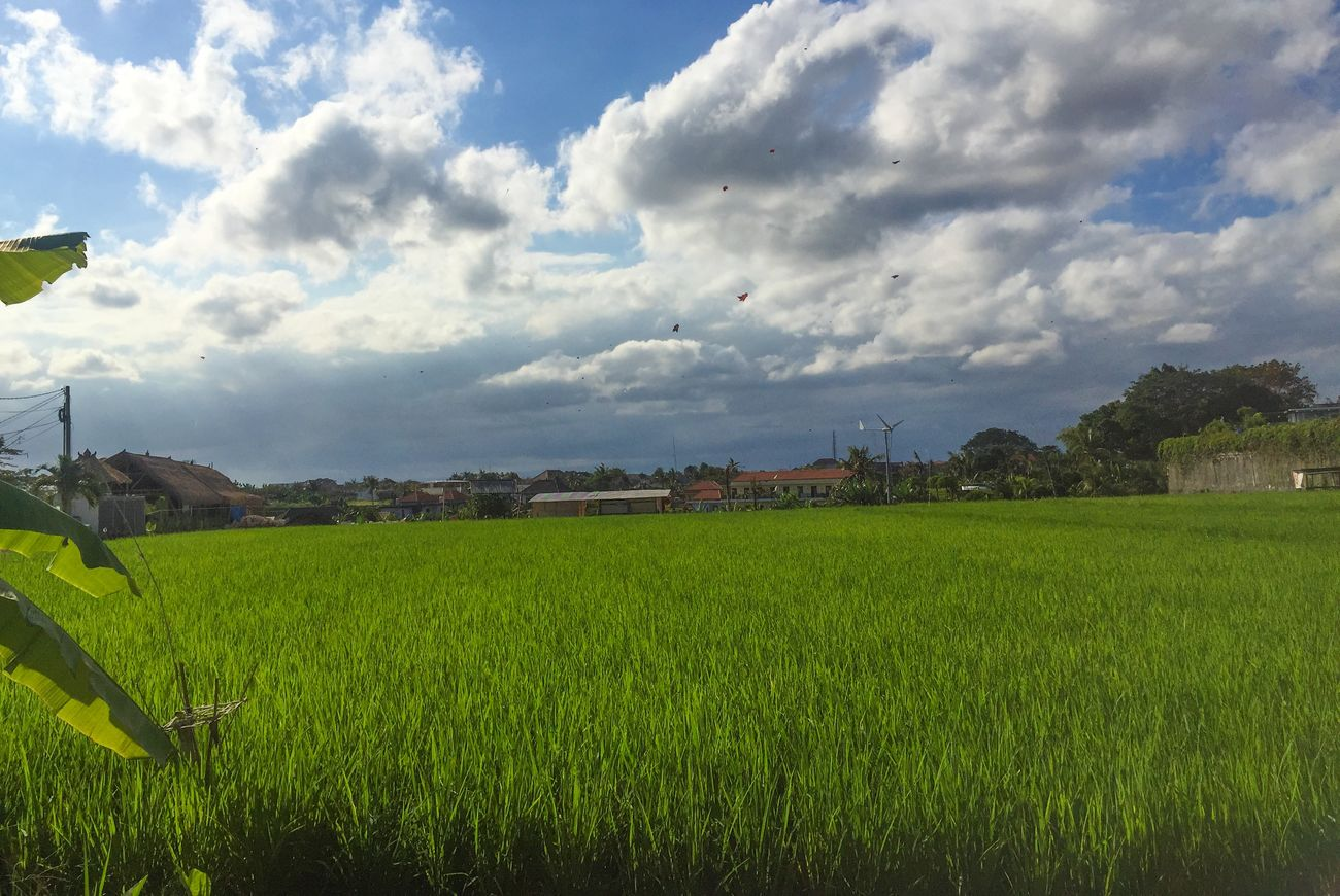 """when i go out from my office, i see this"" Cloudandsky Kite Ricefield"