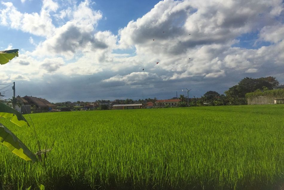 """""""when i go out from my office, i see this"""" Cloudandsky Kite Ricefield"""