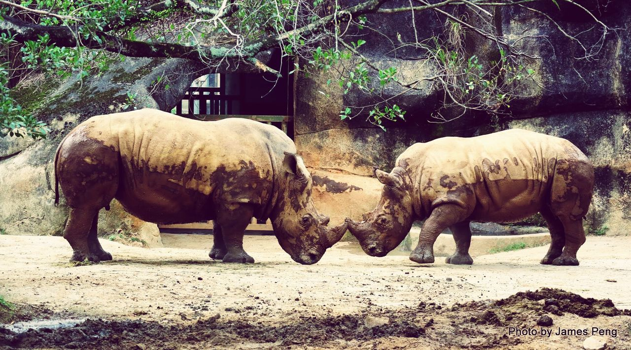 Animals Zoo TAIPEI ZOO STATION Relaxing Taking Photos Enjoying Life Popular Snapshots Of Life Animal Rhino