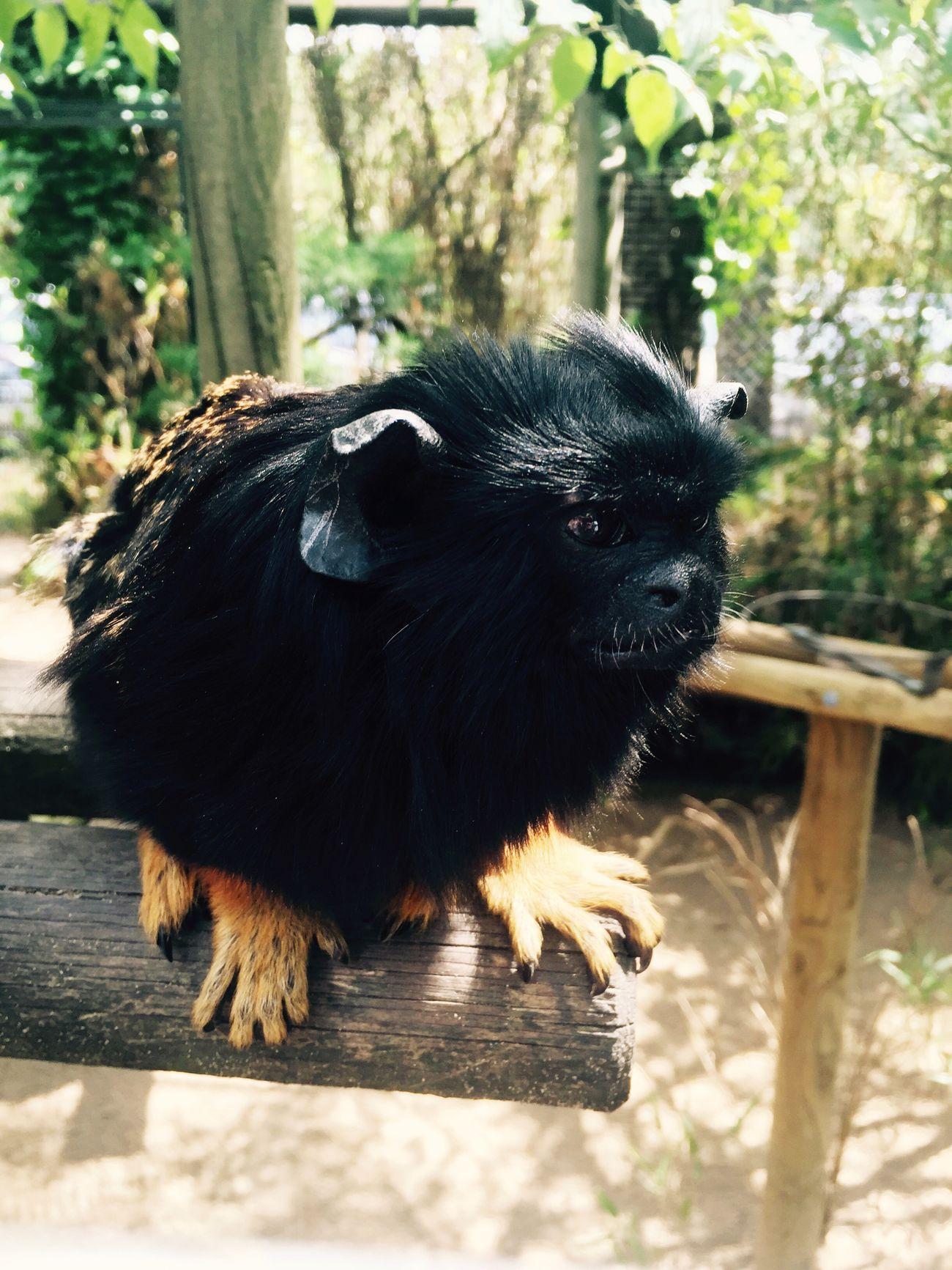Cute Monkey Zoodelapalmyre