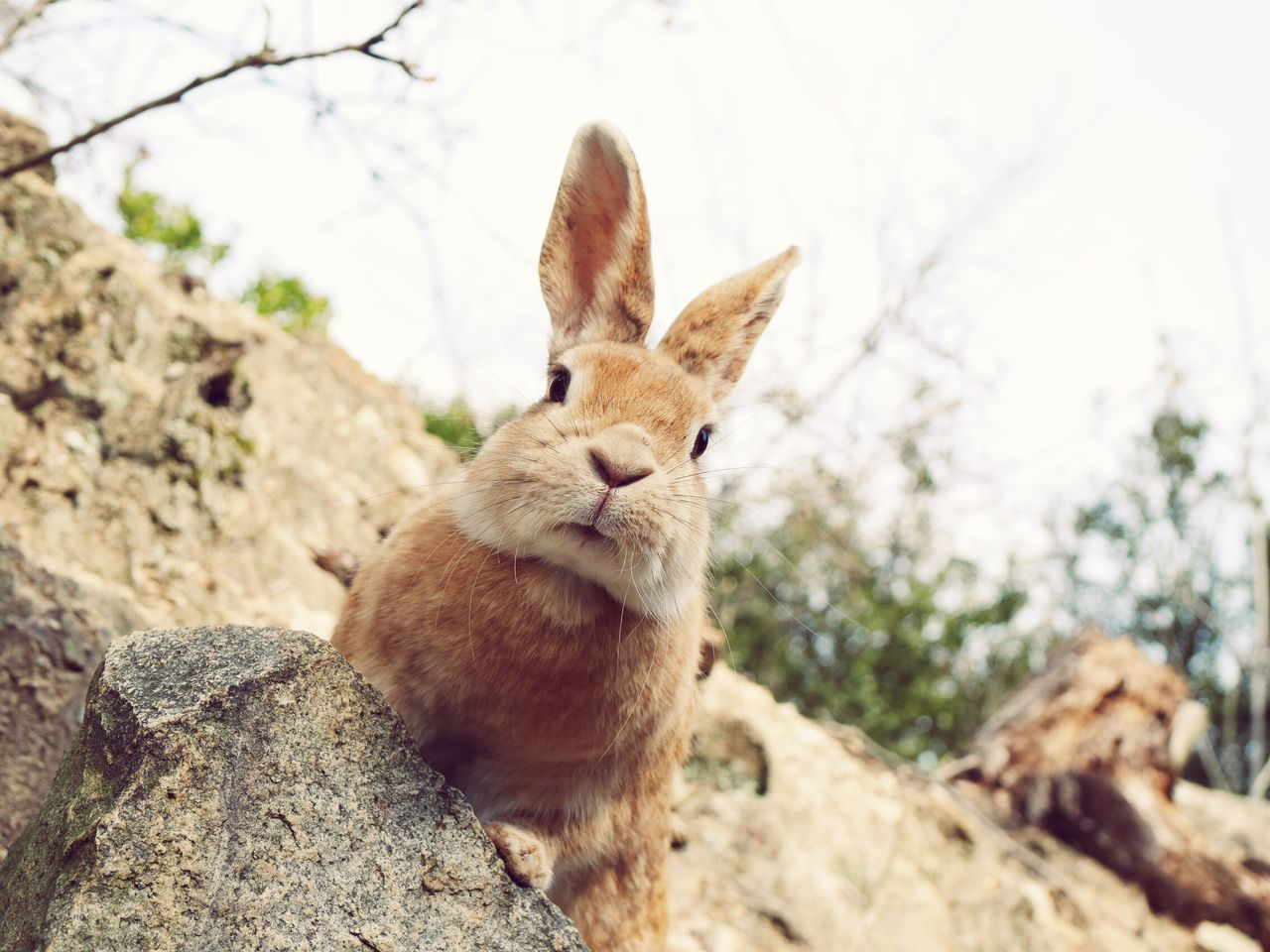 Rabbit Rabbits Rabbit ❤️ Animal Themes Animals In The Wild Animals Animal Animal Wildlife Animal Head  Animal Photography Nature_collection Nature Photography Japanese  Pretty Nature Beauty In Nature Cute
