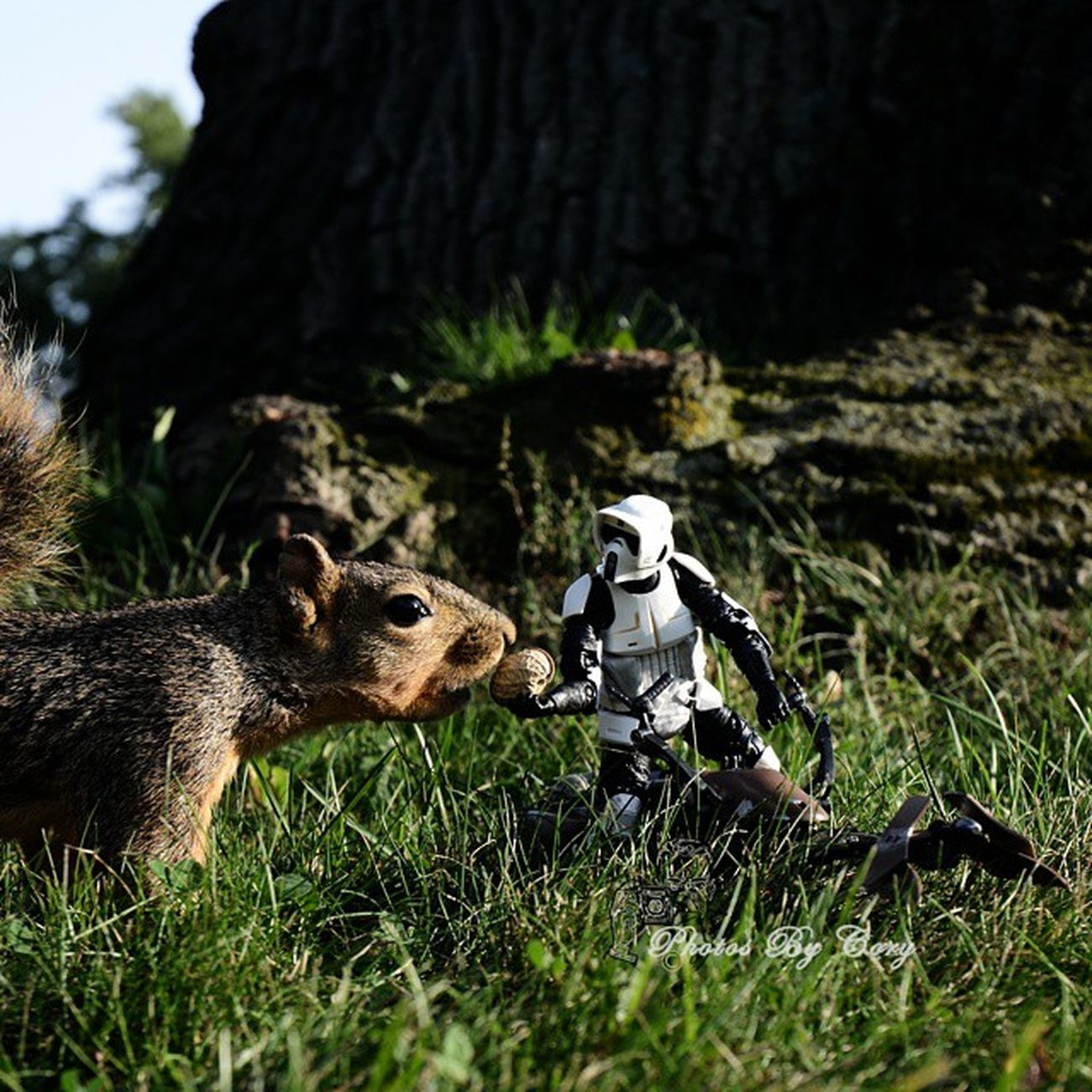 Sometimes being nice to the locals insures they won't strech vines across your path later. Lessonsfromascouttrooper Funwiththesquirrels Scouttrooper