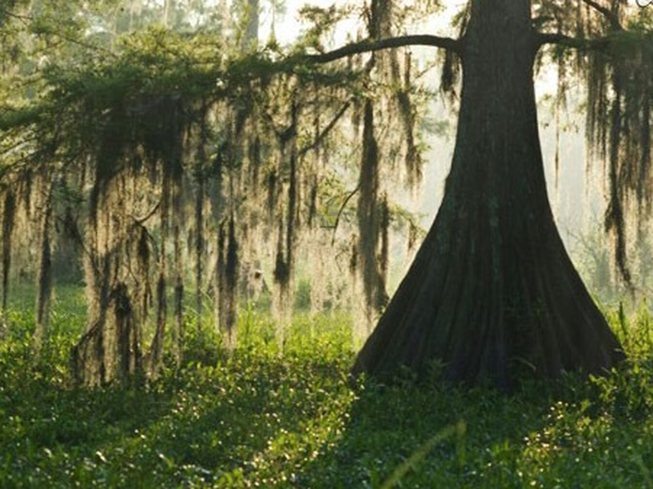 Hello World Trees Nature Hanging Out Huggingatree  Landscape Beautiful Nature