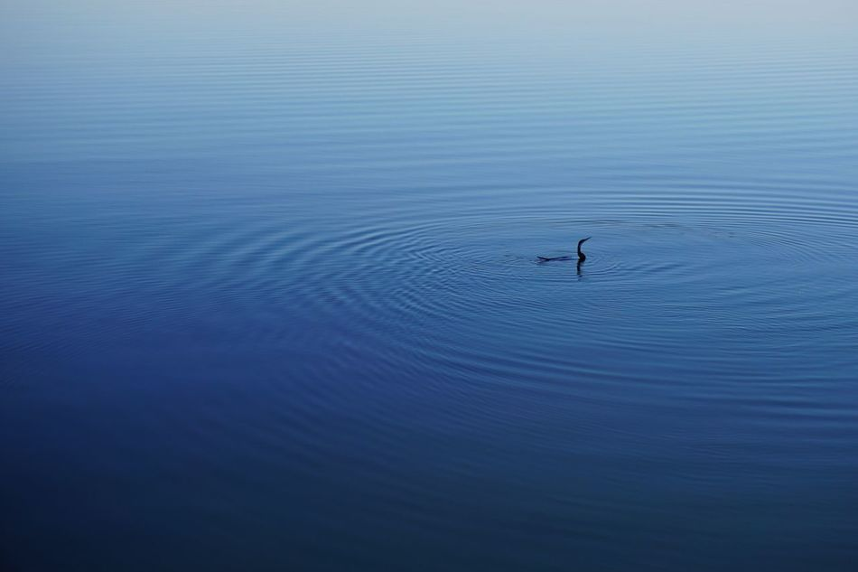 Beautiful stock photos of schwimmen, Idyllic, animal Wildlife, animals In The Wild, beauty In Nature
