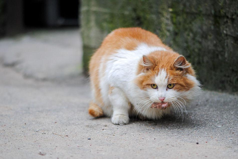 street cat lunch Animal Themes Cat Cats City Cat City Life Domestic Animals Foxy Mammal One Animal Outdoors Pets Street Cat Street Cats Streetphotography Unhoused White