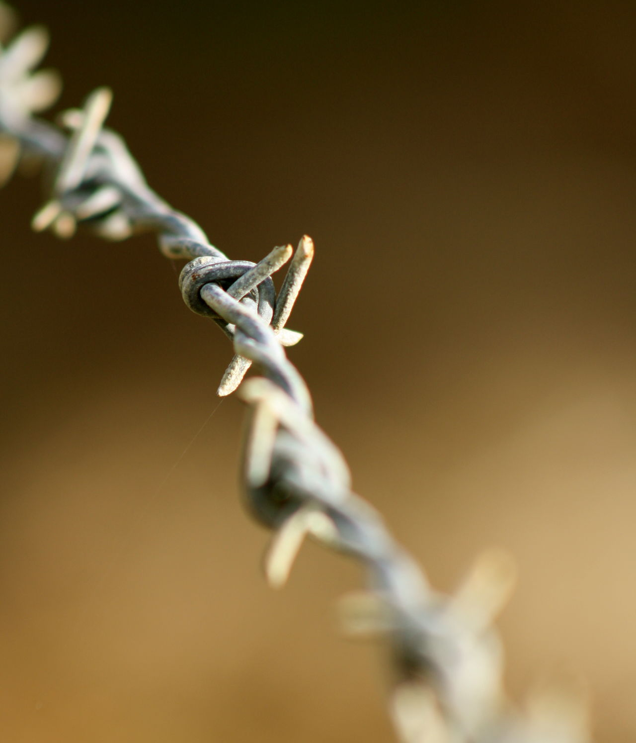 Barbed wire lines Abstract Abstract Landscape Barbed Wire Blurred Background Copy Space Depth Of Field Fencelines Rural Rusty