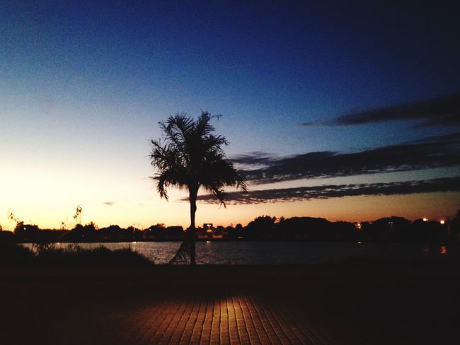🌷 Tree Tranquil Scene Water Sky