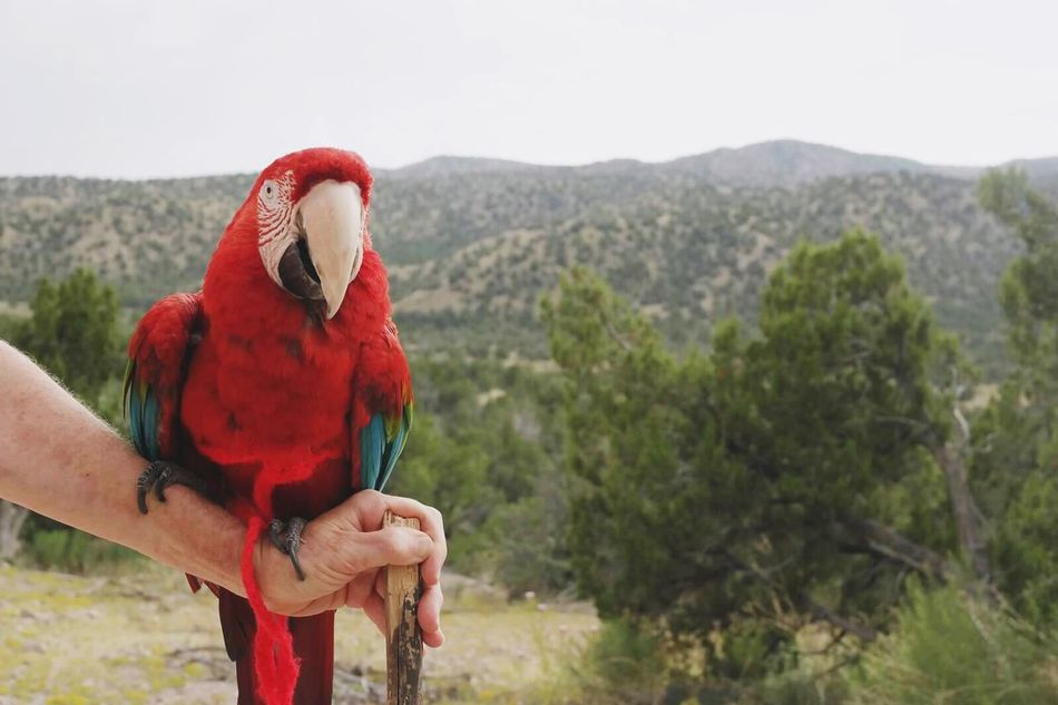 Beautiful stock photos of parrot, Animal Themes, Animal Wildlife, Animals In The Wild, Beauty In Nature