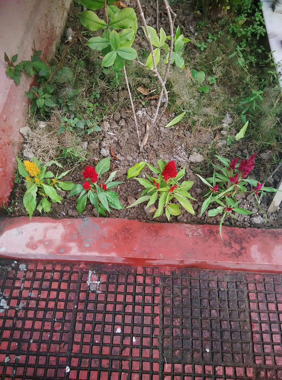 plant, high angle view, day, growth, no people, outdoors, nature, leaf, red, gutter