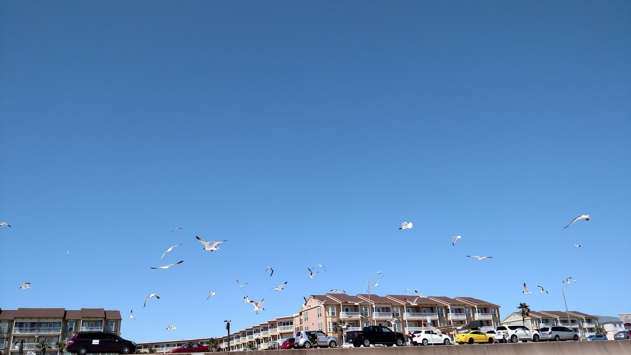 Seagulls Flying Over Buildings Against Clear Sky