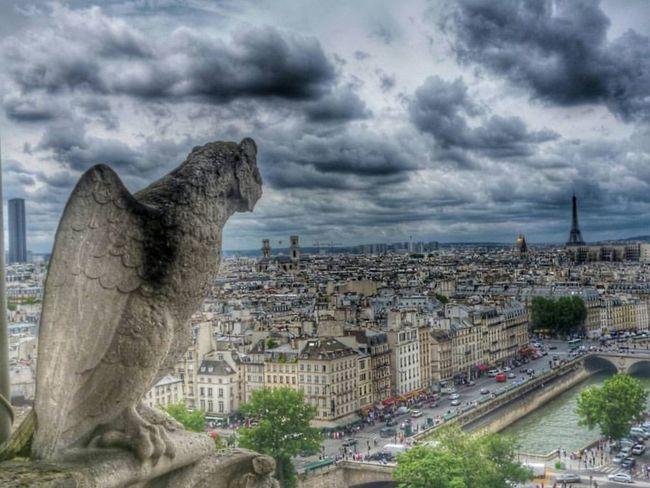 Paris Architecture NOtre Dame