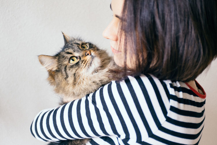 Alertness Animal Head  Animal Themes Cat Comfortable Composition Curiosity Domestic Animals Domestic Cat Feline Front View Looking At Camera Love Loving Mammal One Animal Pets Portrait Relaxation Relaxing Two Animals Valentine's Day  Zoology