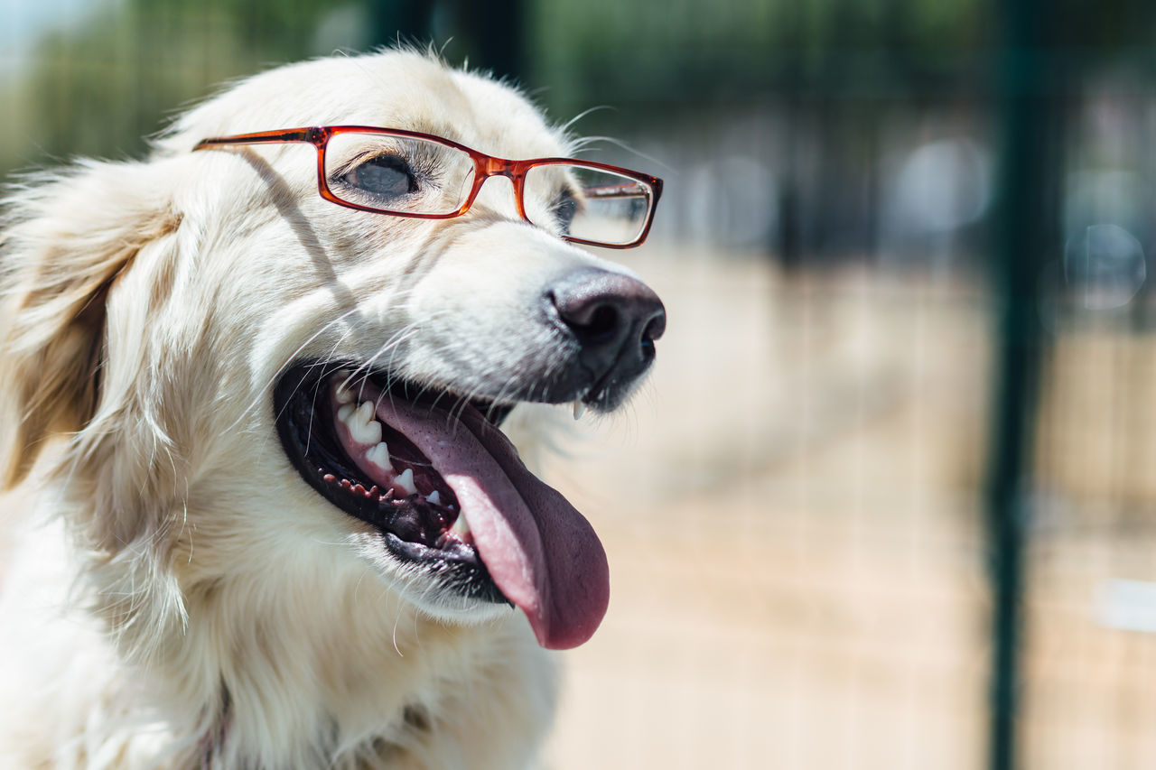 Beautiful stock photos of lustige tiere, Animal Mouth, Animal Themes, Animal Tongue, Canine