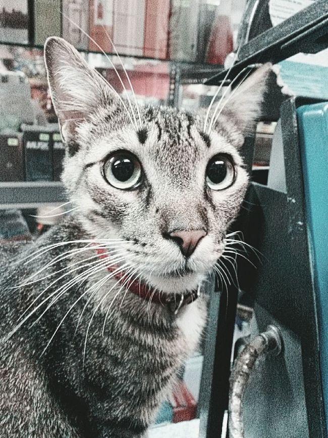 No me mires así. Cat Watching Cat♡ Cat Lovers Loking Somewhere