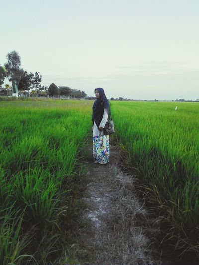 Dreamscapes & Memories Paddy Field Greenery Evening Sky Kedah Malaysia