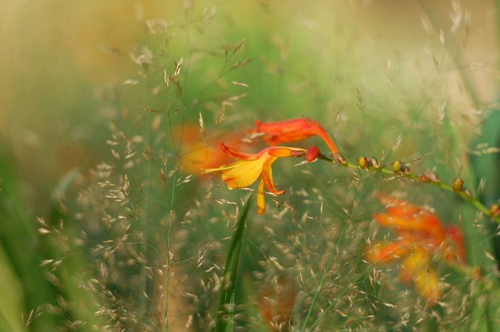 Flower Growth Beauty In Nature Plant Petal Orange Color Field Flower Head Close-up Blooming Grass Yellow Nature Stem Day Autumn Nature Selective Focus Dofaddicts Dof Depth Of Field