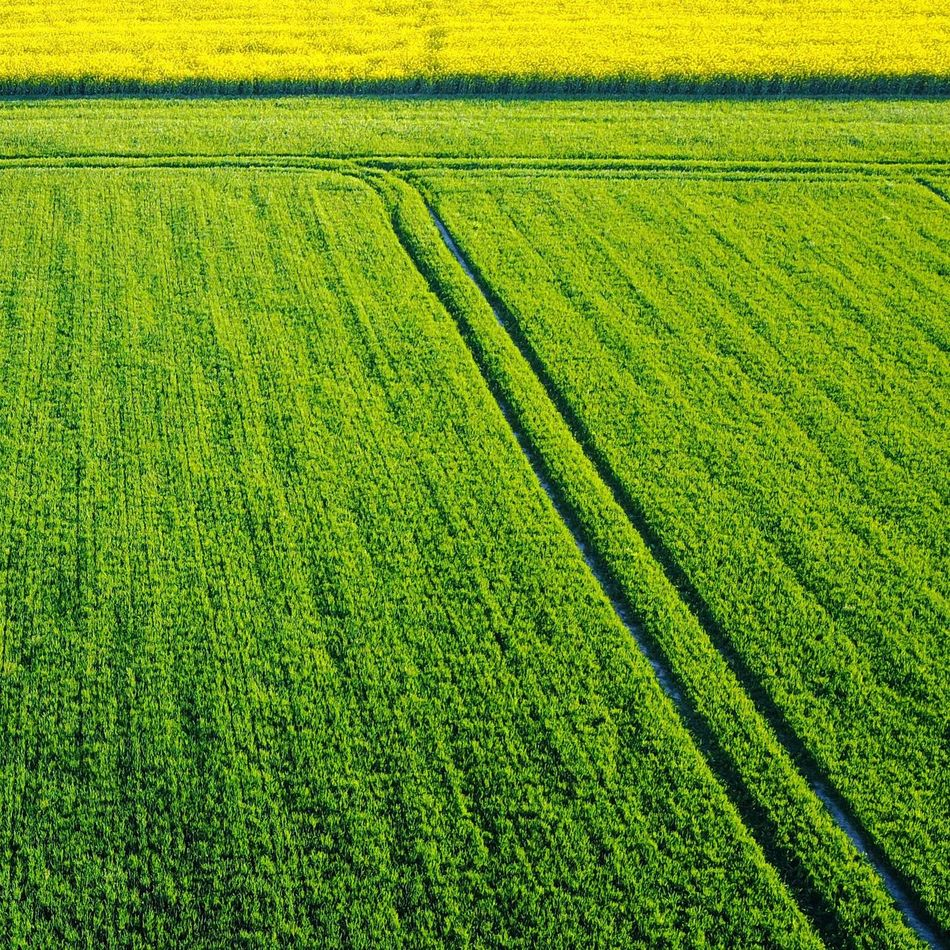 Fields of green... with a hint of yellow thrown in for good measure 😬 Agriculture Rural Scene Field Farm Nature Growth Crop  Outdoors Green Color Day Landscape Beauty In Nature Springtime No People Cultivated Backgrounds Irrigation Equipment Freshness Drone  Dronephotography Switzerland Switzerlandpictures EyEmNewHere