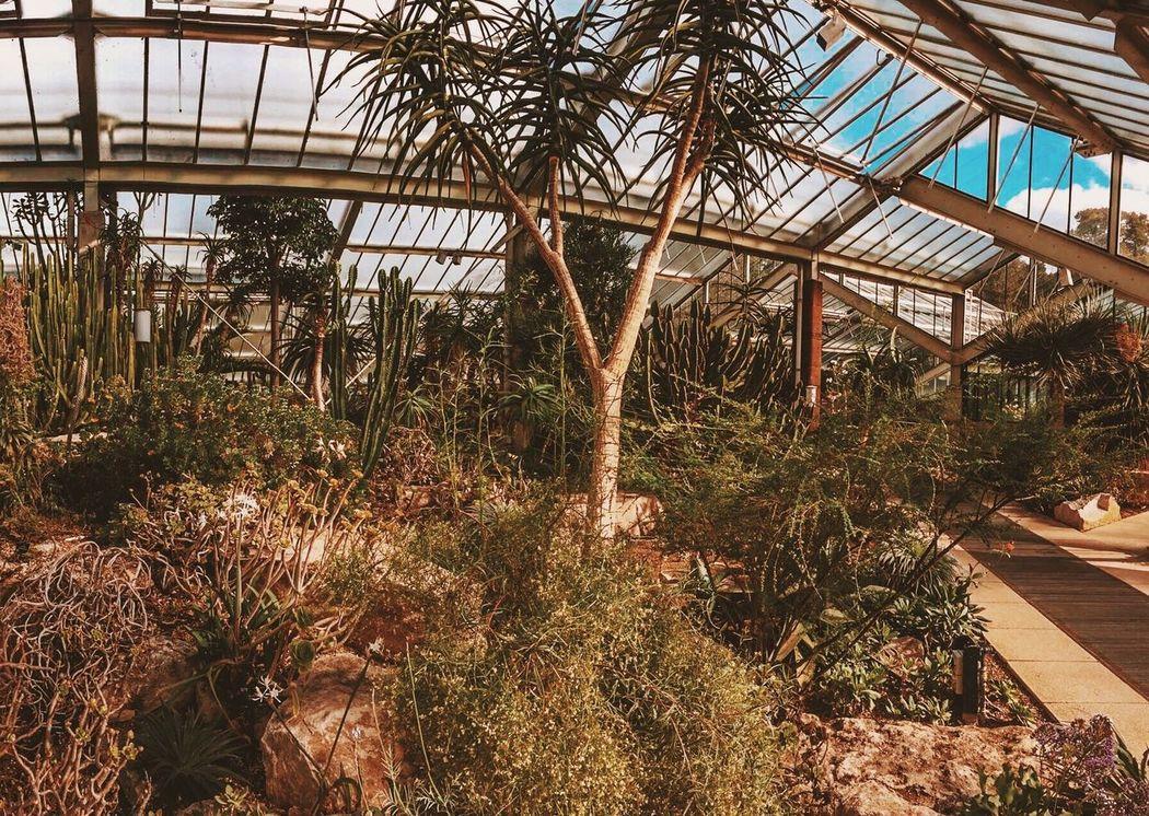 London Kew Gardens Kew Palmhouse Botanic Garden Botanical Gardens Botanical Botany Succulents Euphorbia Agave Aloe Cactus