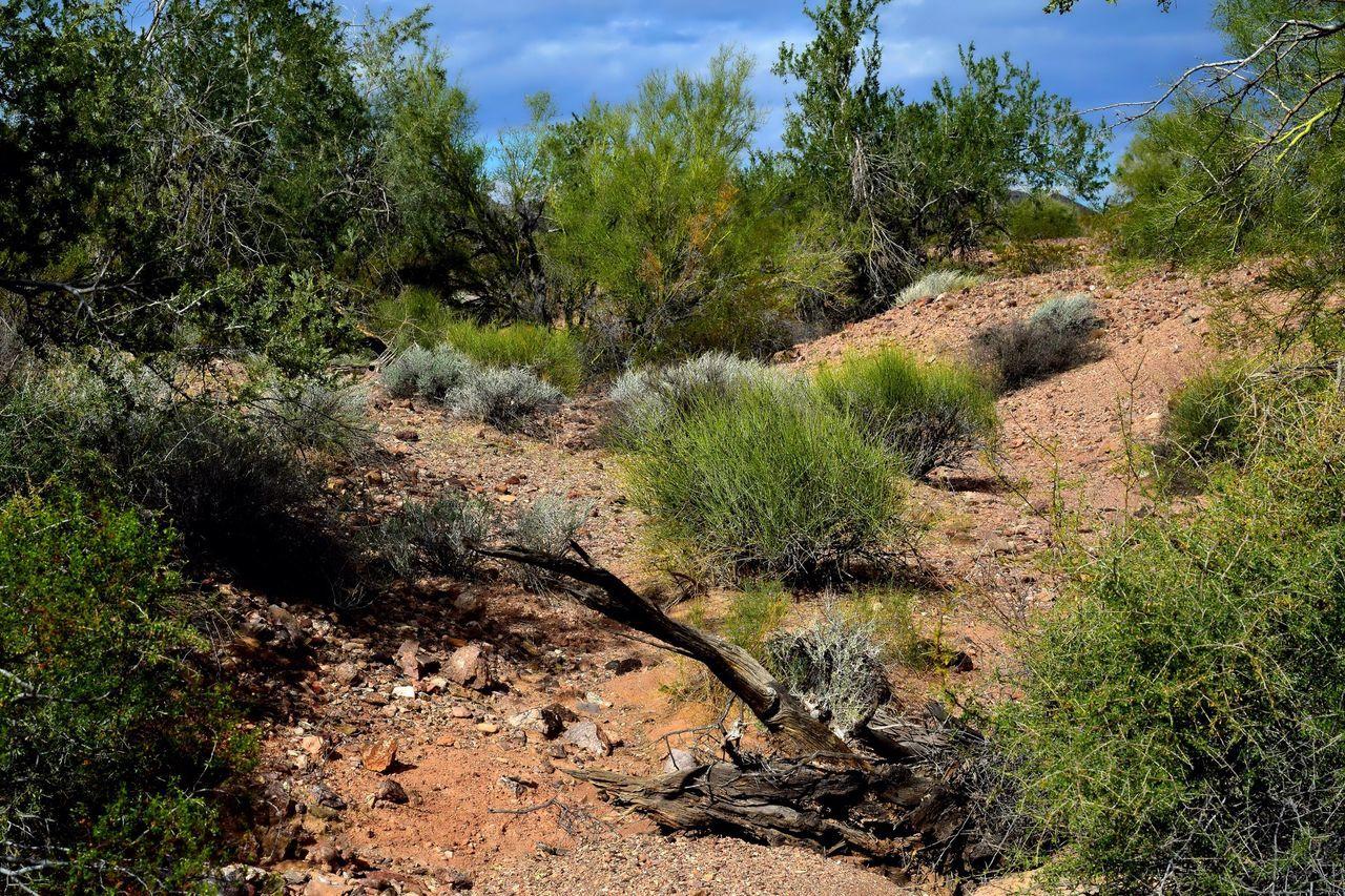 Desert Wash Arizona Desert Beauty Desert Landscape