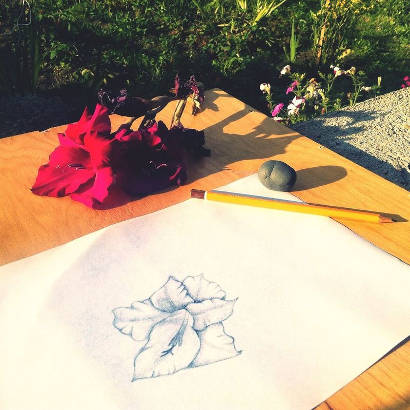 Flower Drawing Picture Nature