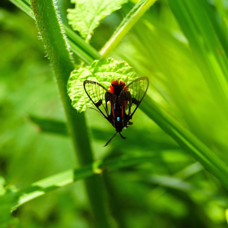 Insect Animal Themes Animals In The Wild Green Color One Animal Leaf Nature Plant (null)Outdoors No People Day Close-up