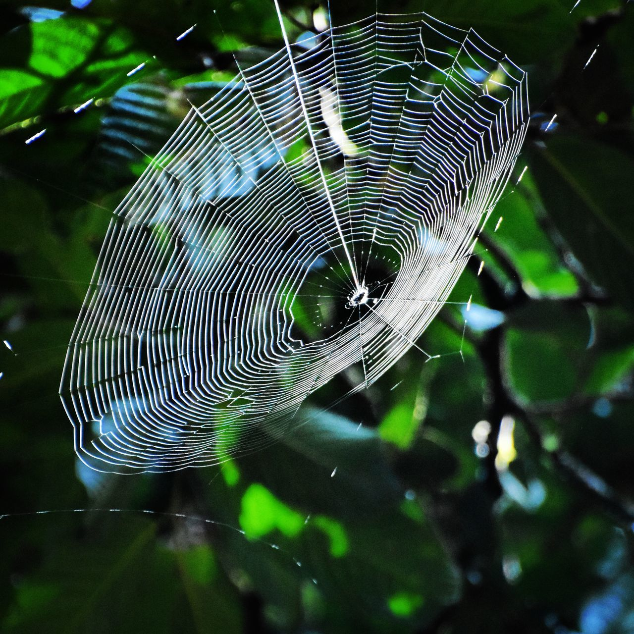 Spider Nature Nature_perfection Danum Valley Spider Web Spider Sabah Below The Wind Sabah Borneo Borneo Danum Valley, Borneo, Sabah, Rainforest Wildlife & Nature Nature, Naturelovers Wilderness Nature_collection Nature Photography Photography Photooftheday Wildlifephotography Wildlife Photography DanumValley Photography In Motion Beauty In Nature Rainforest Sabah Malaysia Danum