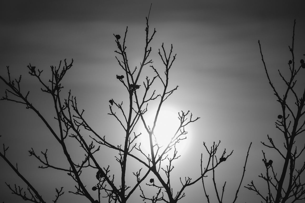 winter is coming? Black And White Blackandwhite Cloud - Sky Moon Moonlight Nature No People Silhouette Sky Supermoon Tree Winter