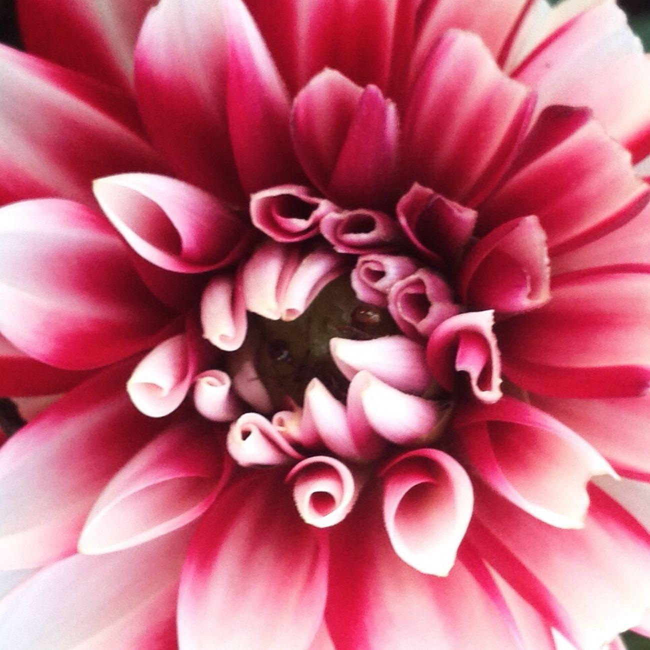 EyeEm Nature Lover Flower Macro Flowerporn
