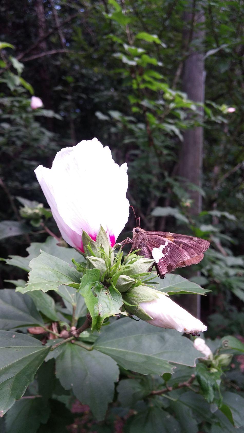 Flowers Bugs Blooms My Back Yard
