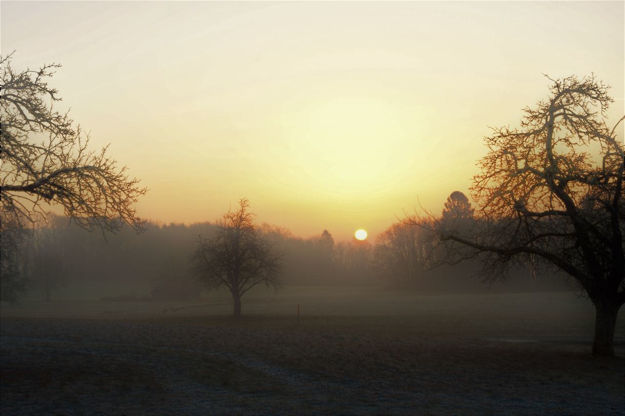 Bare Tree Beauty In Nature Cold Temperature Day Fog Landscape Nature No People Outdoors Scenics Silhouette Sky Sunset Tranquil Scene Tranquility Tree Winter