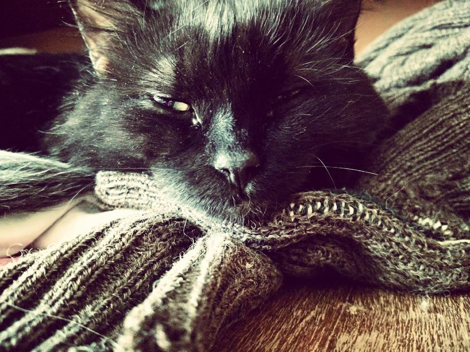 Cat Cats 🐱 Animal Cat Photography One Animal I Love My Cat Pets Cat♡ Sleeping Sleeping Cat Black Cat Kitten 🐱 One Cat Black Cat Photography Domestic Cat