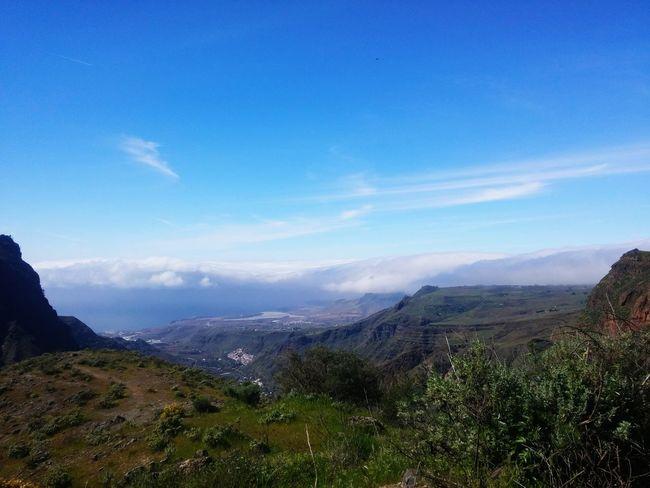 Canary island love