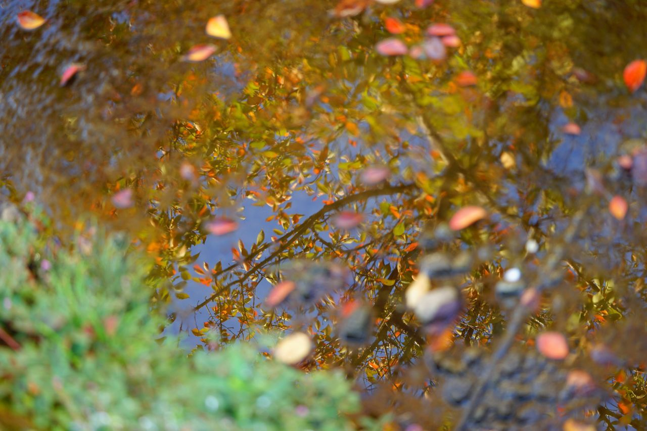 growth, nature, outdoors, beauty in nature, plant, autumn, leaf, tree, flower, no people, day, branch, close-up, freshness