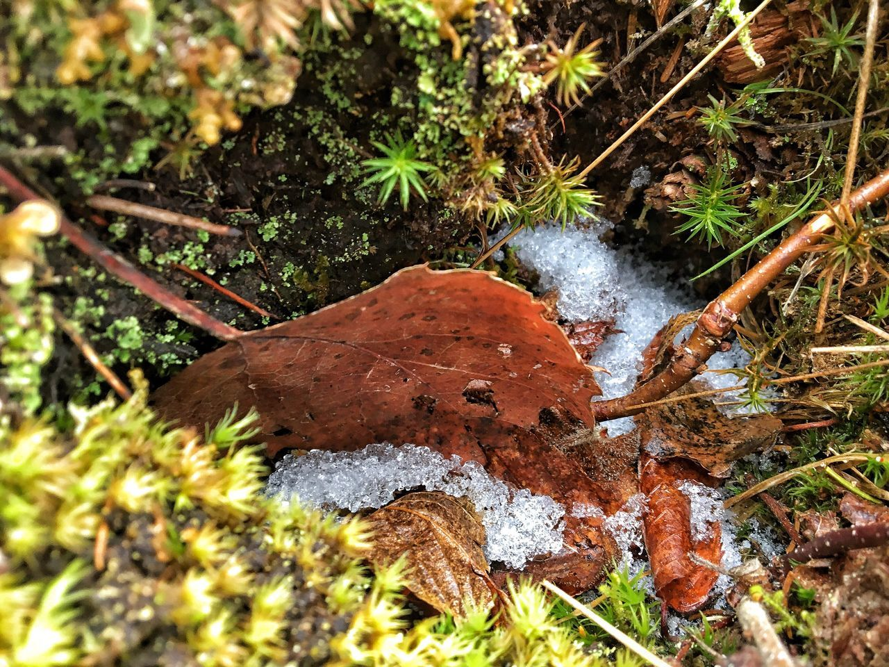 Outdoors Day Moss Ground Looking Down Winter Cold Temperature Ice Snow Nature Growth Beauty In Nature Forest Close-up Fine Art Photography Leaf Tranquility Water No People Tree Freshness
