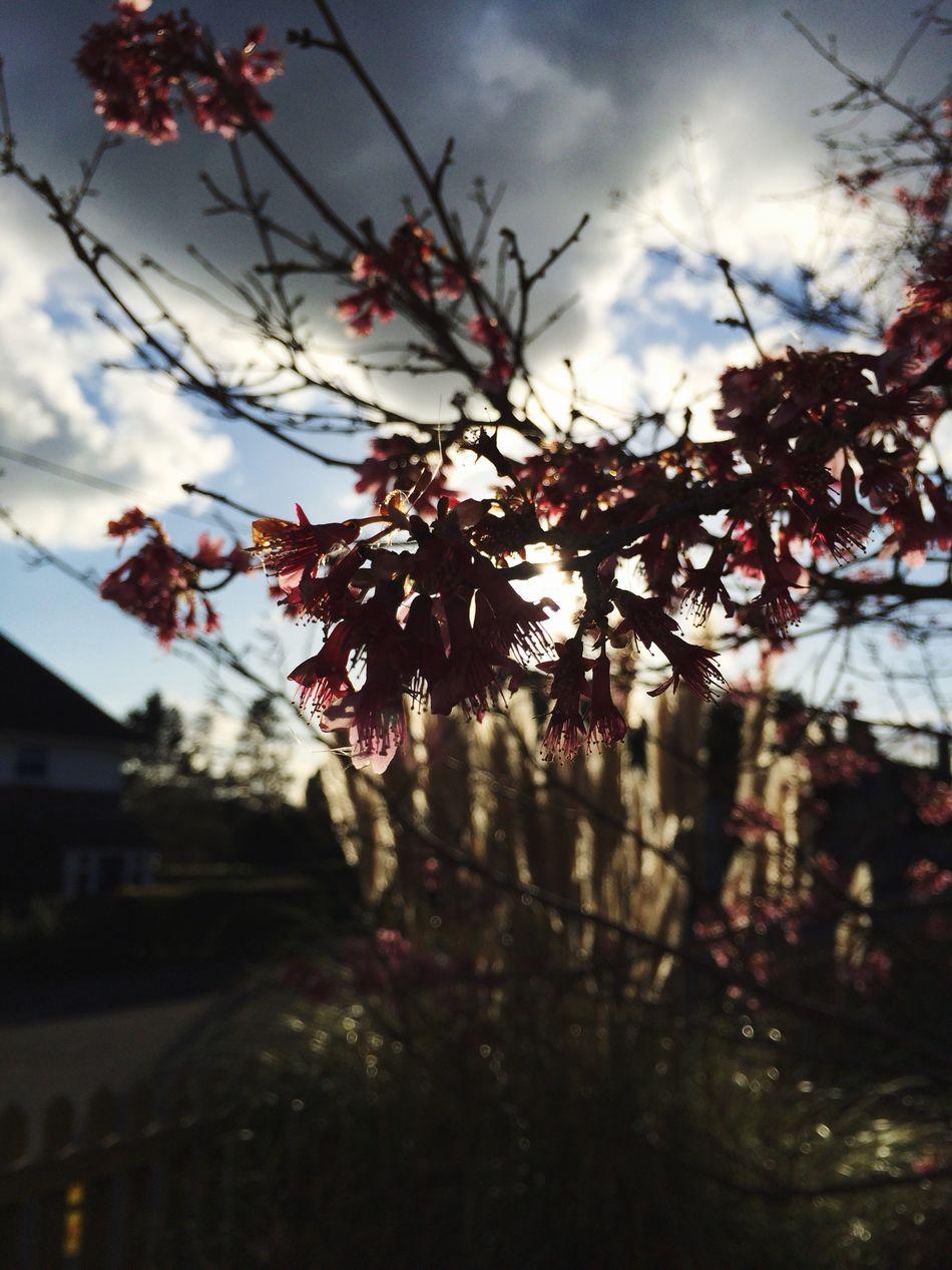 Waking up to a warming sun. Hello World Waking Up School Buds Tree Sunshine