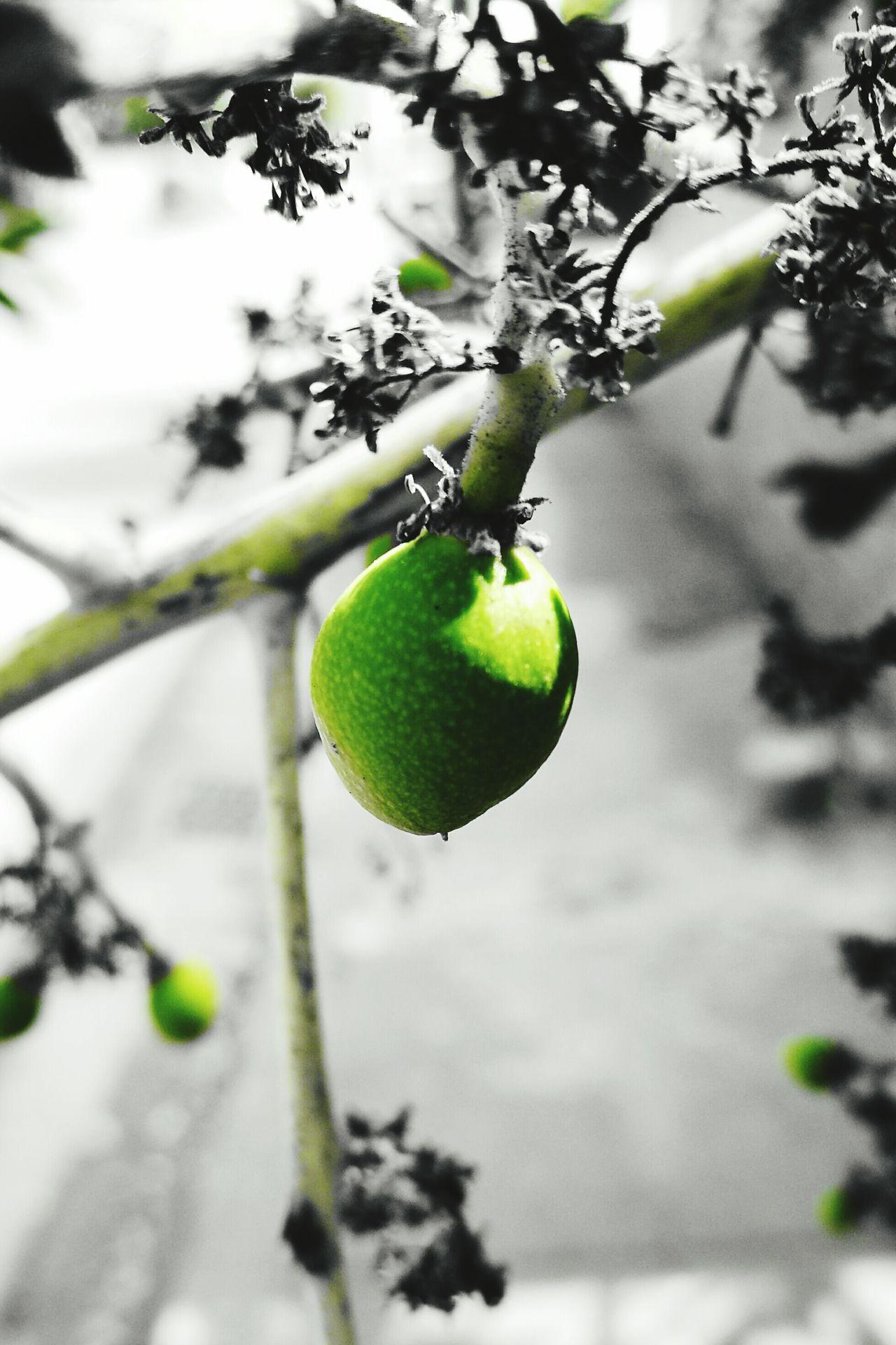 Mango Hot Day Sunnyday☀️ 芒果季