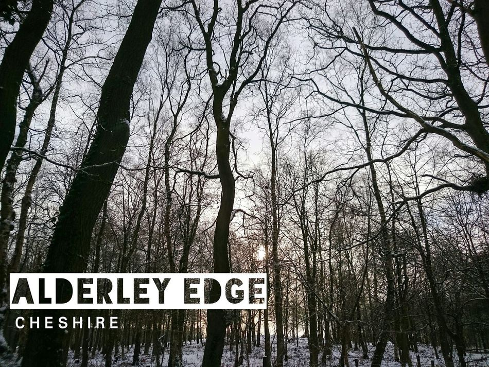 A snowy wood in the beautiful, Alderley Edge // Snow Trees Alderley Edge Cheshire Nature Promo Countryside Sun Through The Trees Promotion Textography