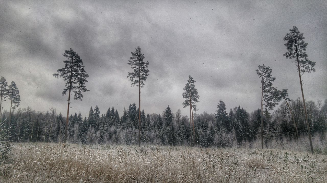 Forest Winter Snow Iecava Baldone Cold LGG4 Lgg4photography